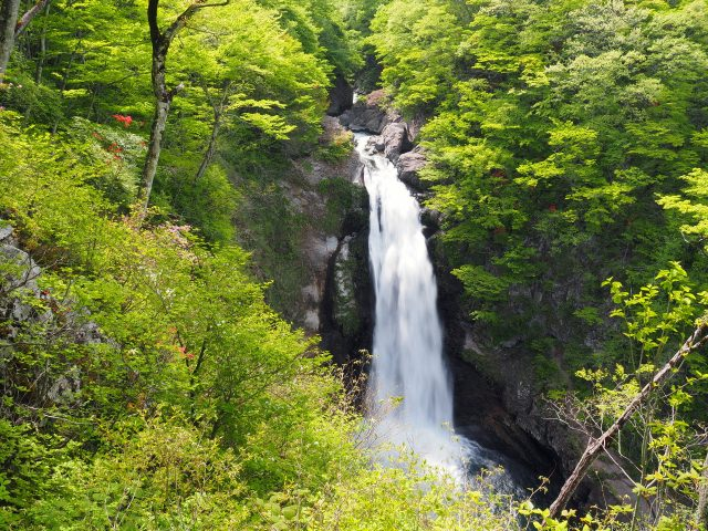 8. Be overwhelmed by the dynamic and powerful view The popular sightseeing spot in Miyagi [Akiu Waterfall]