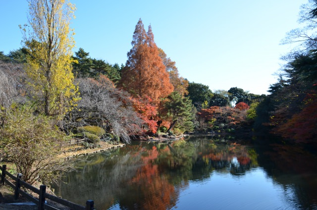 3. The colourful autumnal tints in the attractive oasis in Tokyo [Shinjuku Gyoen]