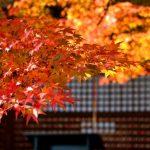 大阪で秋の紅葉を楽しむならココ!絶対におすすめな人気の紅葉の名所10選!