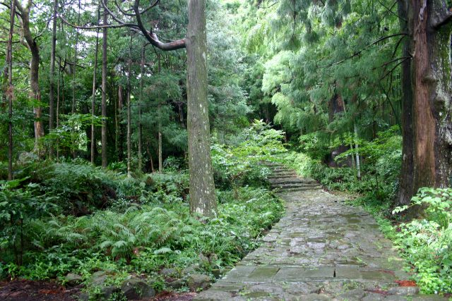 9. The power spot which is spreading about in the Kii peninsula is recommended for sightseeing. [Kumanokodou]