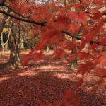 秋の絶景を見に行こう!関西で紅葉を見るならおすすめな人気の名所10選!