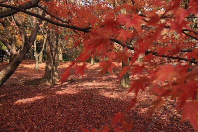 9. 古都京都の紅葉景色を堪能するなら。「東福寺」