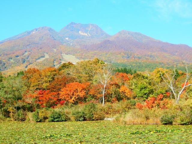8. 新潟の自然を感じながらのんびりとハイキングを楽しむ観光スポット「妙高高原」