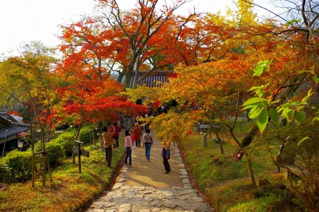 6. 九州の歴史感じる紅葉スポット!鮮やかな木々を「秋月城跡」