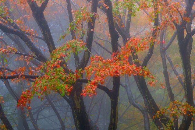 5. 紅葉の中ドライブを楽しむ。関西でも有名な「比叡山ドライブウェイ・奥比叡ドライブウェイ」