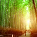 高校生の京都観光なら絶対ココ!今話題のおすすめスポット10選!