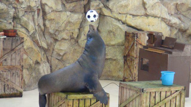 4. 雨が降っても大丈夫!三重で海の生物に出会える観光スポット「鳥羽水族館」