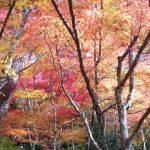 これぞ秋の絶景!神戸で美しい紅葉を見るなら絶対におすすめな人気の名所10選!