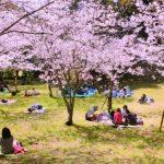 九州で桜のお花見ならココ!定番から穴場まで花見におすすめの人気スポット10選!