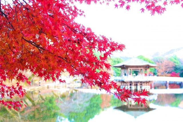 4. 紅葉と野生の鹿をみれる場所。「奈良公園」