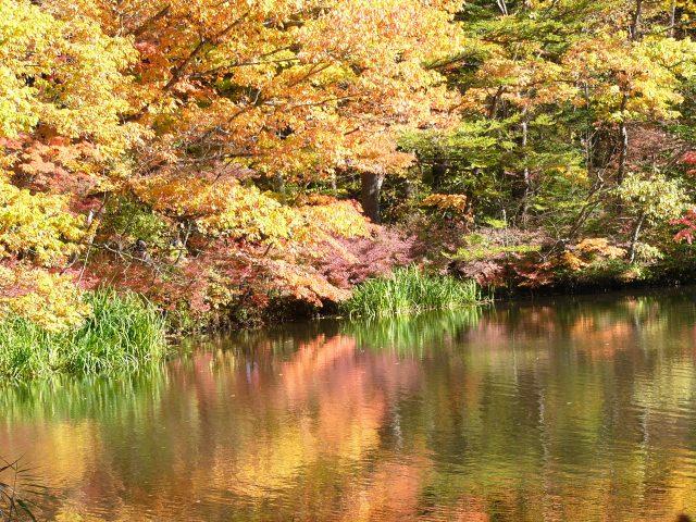 1. 軽井沢の美しい観光スポット「雲場の池」