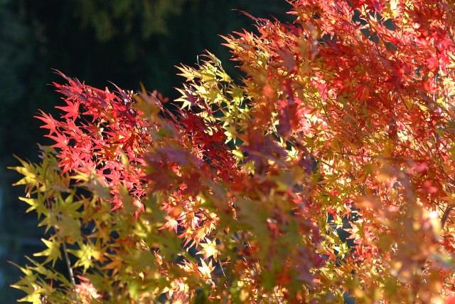 1. 自然の大パノラマを上空から満喫。青森で紅葉を楽しむなら「八甲田山」