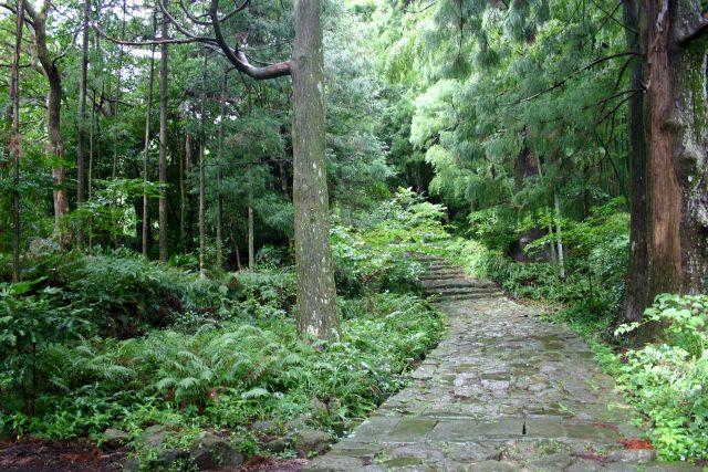 7. 美しい自然を満喫できる観光スポット「熊野古道 伊勢路」