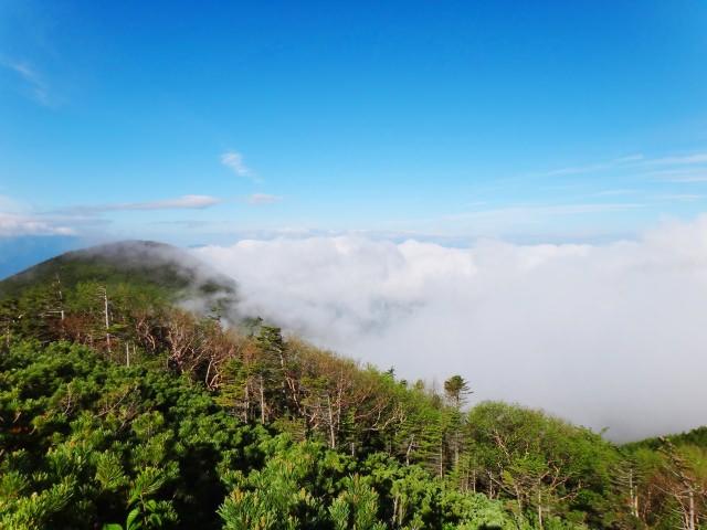 6. 山梨の自然を満喫できる定番観光スポット!野鳥もみられる!「八ヶ岳 清里サンクチュアリ」