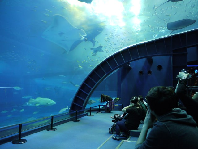 10. The largest aquarium in Japan! Standard of the standard, Okinawa Churaumi Aquarium