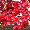 定番から穴場まで!青森県で秋の紅葉を見るならおすすめな人気の名所10選!