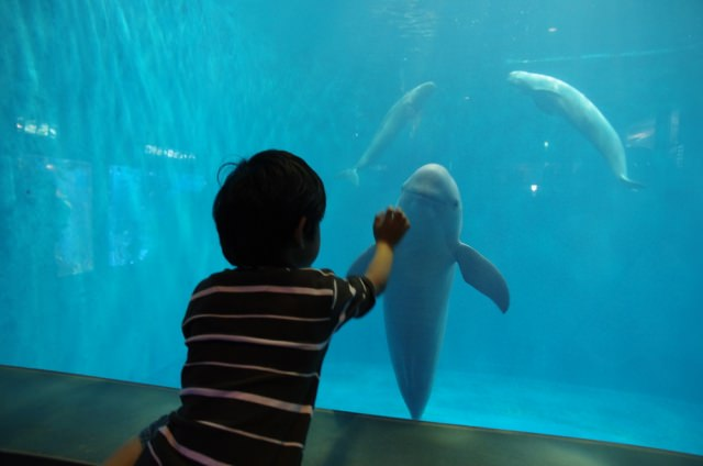 6. A long-established Japanese aquarium that has been loved for a long time, Toba Aquarium