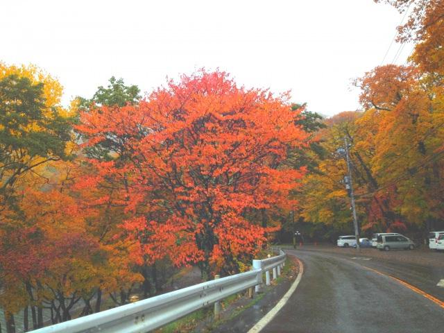 8. ドライブを楽しみながら日本屈指の紅葉を味わう「いろは坂」