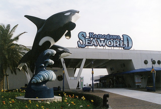 2. A popular aquarium in Japan in Chiba Prefecture, Kamogawa Sea World