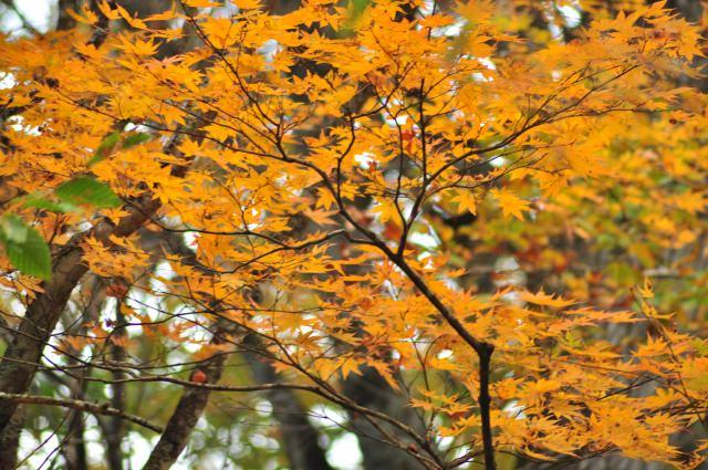 2. 日本の北で見る、渓流沿いに染まる紅葉景色「奥入瀬渓流」