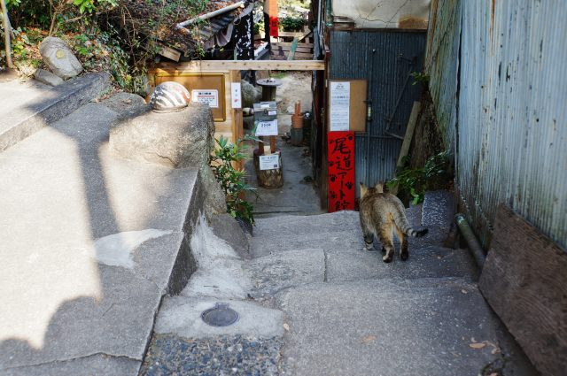 7. A tourist attraction of Onomichi for cat lovers The Narrow Path of Cats