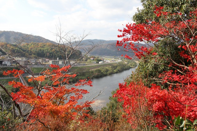 Beautiful Colored Leaves in Vivid Red and Orange, Ozekiyama Park
