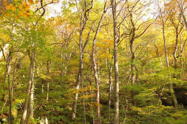 6. 気軽に大自然の紅葉を堪能できる青森のスポット「奥入瀬渓流」