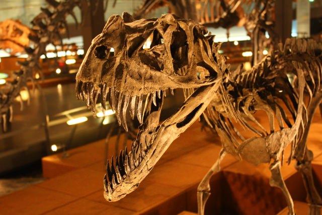 37. 【福井県】家族連れにもおすすめの人気観光スポット!「福井県立恐竜博物館」