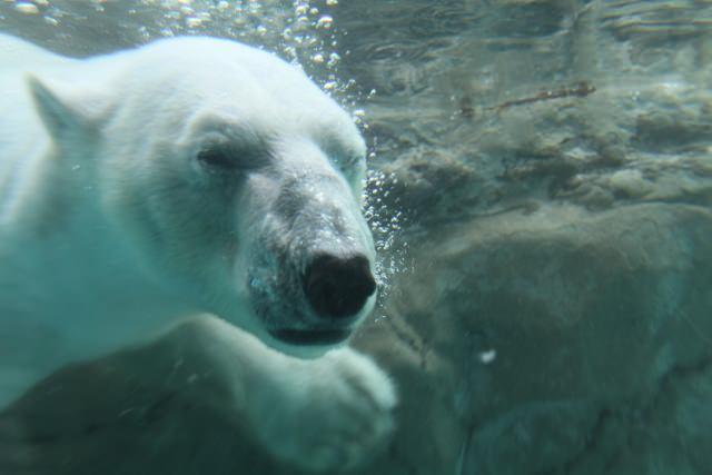 2. 日本でもトップクラスの人気を誇る動物園といえば!「旭川市旭山動物園」