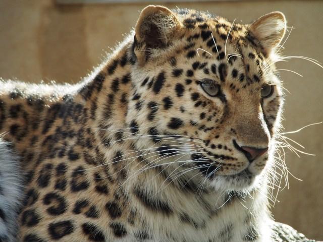 10. 市立動物園とは思えないほどの充実ぶり「神戸市立王子動物園」