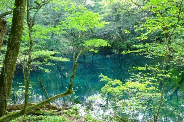 4. 日本初の世界自然遺産は必ず訪れるべき観光スポット!「白神山地」
