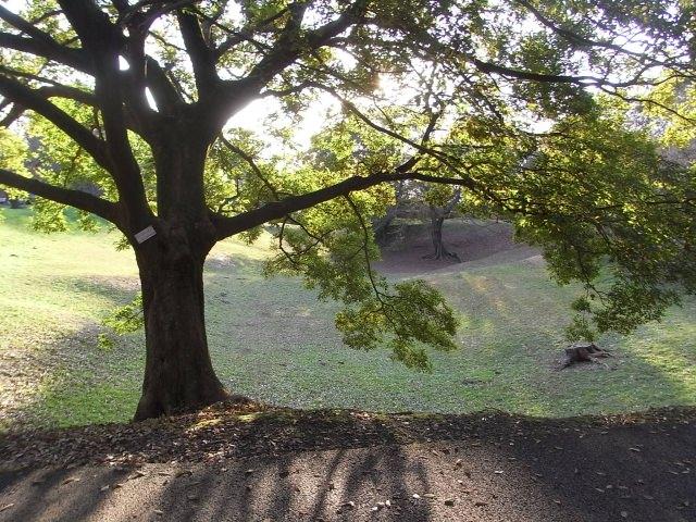 7. 桜の名所として知られる観光地「佐倉城址公園」