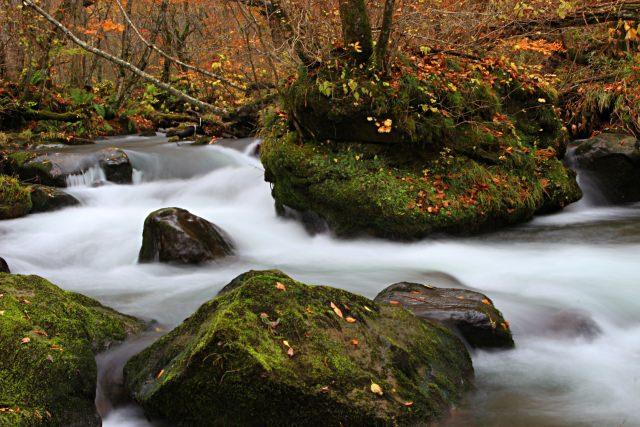 1. 色づいた樹木がおおう東北の渓流美「奥入瀬渓流」