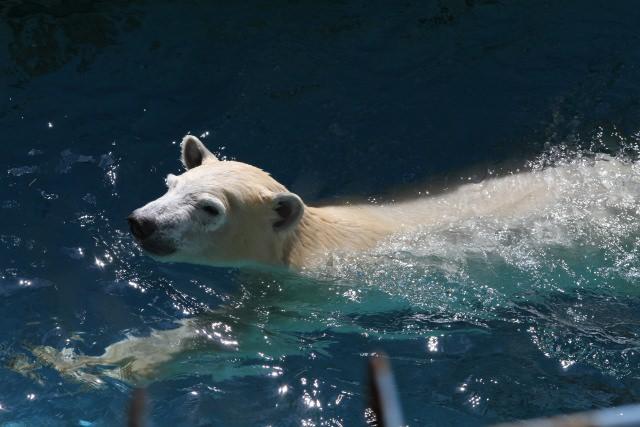 5. 100年余りの歴史を誇る老舗の動物園「天王寺動物園」
