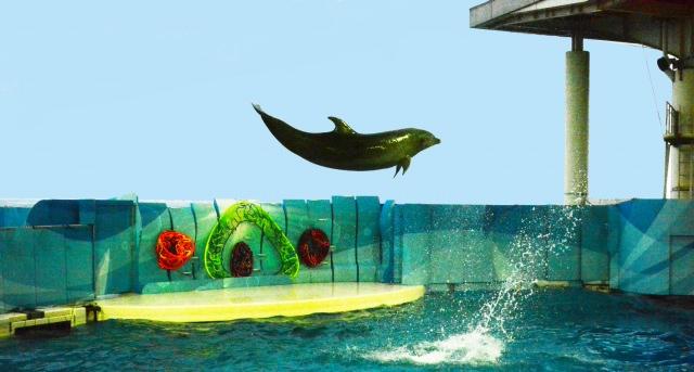4. ファミリー・カップルに大人気の江ノ島の観光スポット!「新江ノ島水族館」