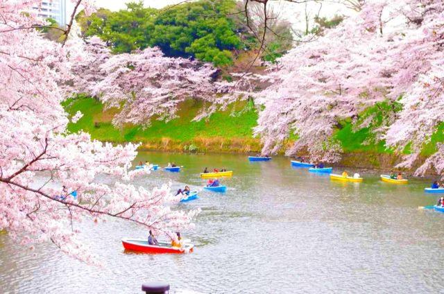 7. まさに東京にある都会のオアシス!桜も美しい、「千鳥ヶ淵緑道」