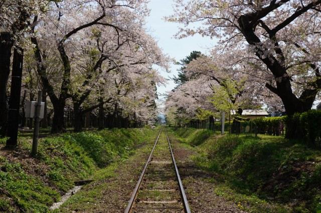 2. 桜のトンネルの下を走る津軽鉄道が見られる「芦野公園」