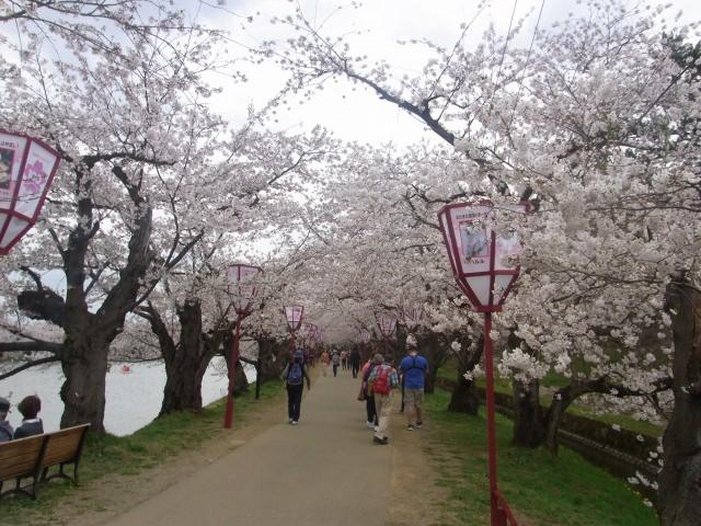 4. お城をバックに日本の風景を楽しむ!桜の名所!「弘前公園」