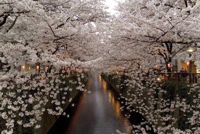 4. カップルにオススメ!ゆったりと桜を楽しめるお花見スポット「目黒川」