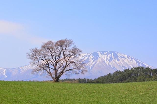 3. 岩手県の桜の名所!桜のトンネルをくぐろう!「北上展勝地」