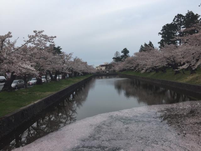 8. 山形県で桜の花見を楽しむならここ!「鶴岡公園」
