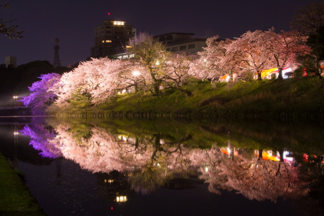 1. 歴史に思いをはせながら楽しむ城跡の桜「舞鶴公園」(福岡市)