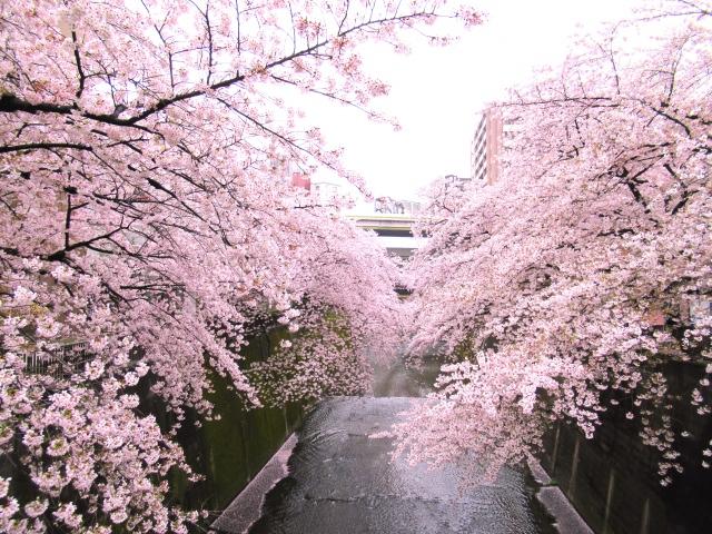 8. 東京で穴場中の穴場お花見スポット!桜をゆっくり楽しめる!「石神井川」