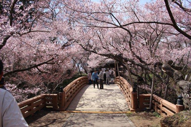 7. 日本100名城の高遠城を彩る天下第一の桜。花見にも最適な「高遠城址公園」