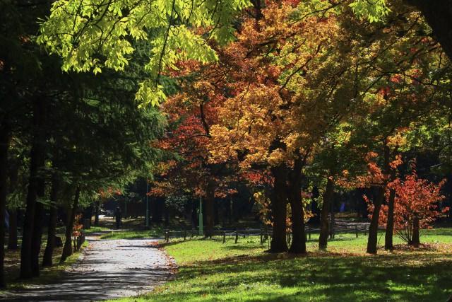 3. 札幌市民の憩いの場!美しい紅葉景色に癒される「円山公園」