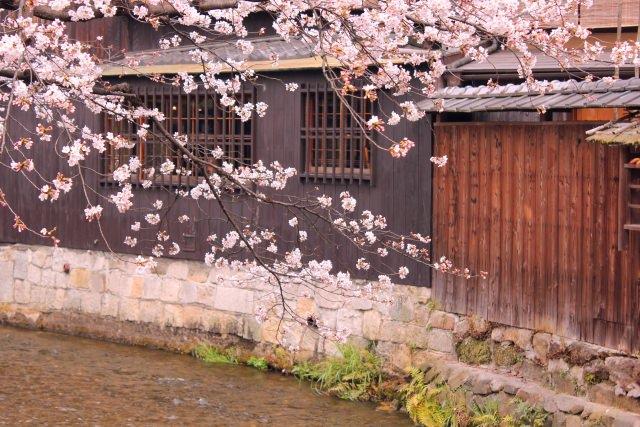 3. 古都京都の風情を感じながらお花見を楽しめるスポット!「祇園白川」