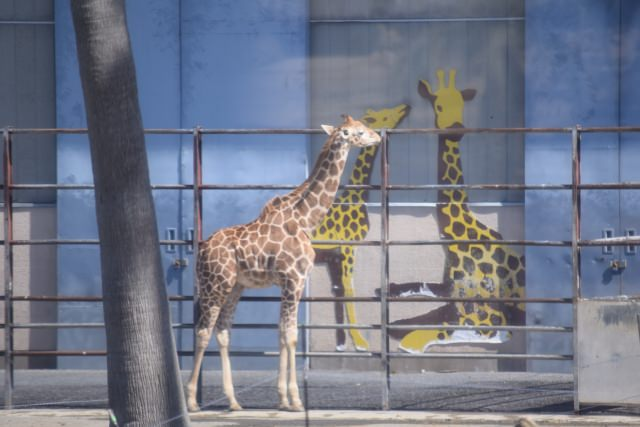 2. ジャイアントパンダに会える!関西でも人気の動物園「和歌山アドベンチャーワールド」