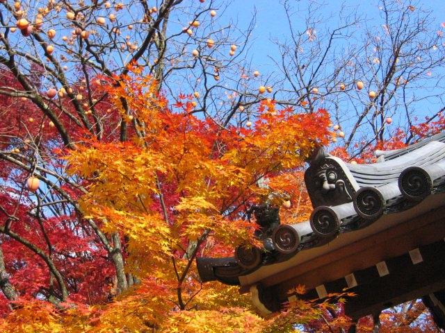5. 山肌に覆い被さるように色づく紅葉を。嵐山の定番紅葉スポット「常寂光寺」