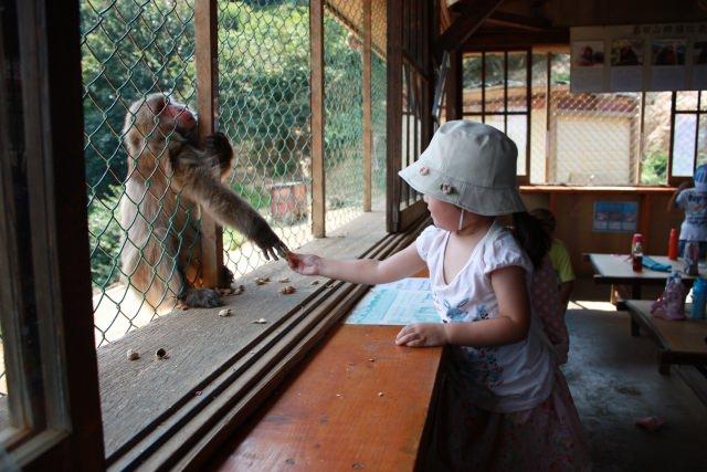 9. お猿さんたちの楽園へ!「嵐山モンキーパークいわたやま」