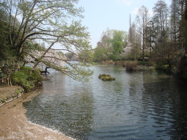 4. 吉祥寺の定番観光スポット!デートにも最適な 「井の頭恩賜公園」